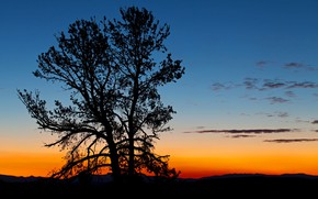 Picture tree, silhouette, Wyoming, glow, USA