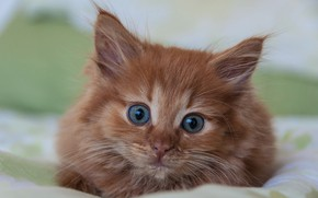 Wallpaper kitty, baby, red, muzzle, look
