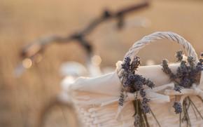 Picture flowers, bike, mood, basket, lavender, bokeh