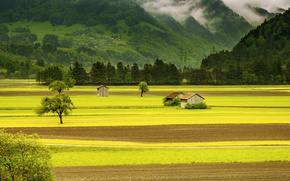 Picture forest, trees, mountains, fog, field, Switzerland, valley, houses