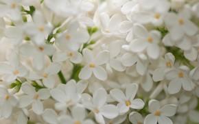 Picture macro, white, lilac