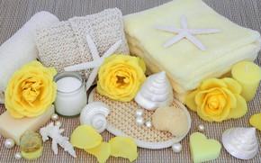 Picture flowers, soap, shell, flowers, bath, still life, candle, spa, salt, seashells