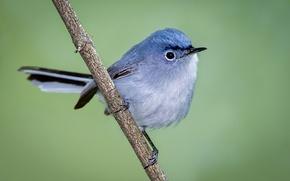 Picture bird, branch, beak, tail, blue Komarovka