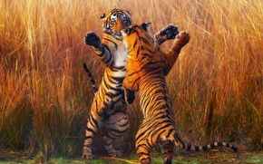 Picture tiger, tigers, fight, stand