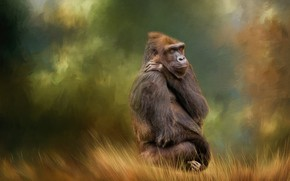 Picture background, texture, monkey, Gorilla