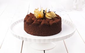 Picture cake, physalis, cocoa