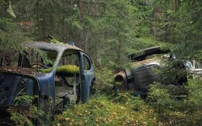 Picture forest, machine, scrap