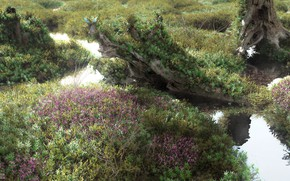 Picture vegetation, snag, mossy