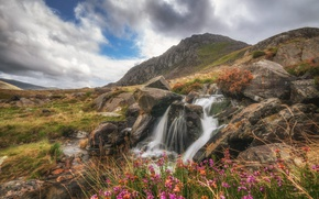 Picture landscape, flowers, mountains, stream, stones, rocks, Wales