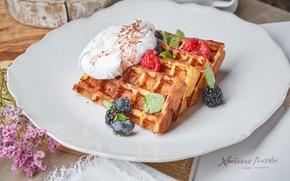 Picture berries, strawberry, ice cream, dessert, waffles, BlackBerry