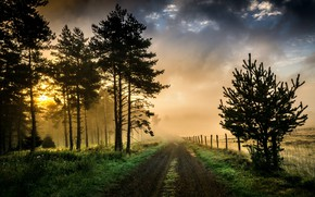 Picture nature, morning, light, road, fog