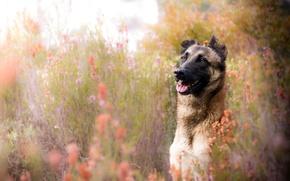 Wallpaper summer, each, dog