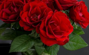 Picture roses, bouquet, red, vase