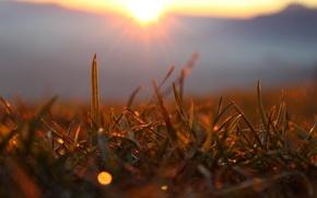 Wallpaper sunset, grass, glare, mountains, sun, macro, forest, rays, macro, forest, the sun, grass, sunset, sunshine, ...