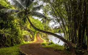 Picture road, tropics, Palma