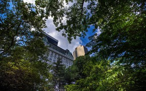 Picture trees, nature, building, New York City - USA