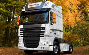 Picture autumn, trees, foliage, black and white, DAF, tractor, DAF, 4x2, DAF XF105.460, White Edition, Super ...