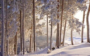 Picture winter, frost, water, snow, trees, beauty