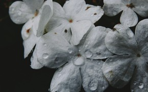 Picture flower, macro, drop