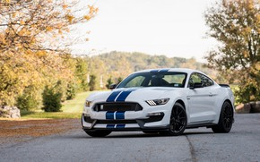 Wallpaper Shelby, Blue, White, GT350, Strips
