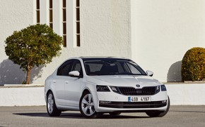 Picture white, asphalt, wall, sedan, the bushes, Skoda, Skoda, Octavia, four-door