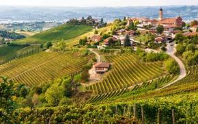 Picture Italy, wine, Piemonte, red wine, vineyards, Denomination of Controlled and Guaranteed Origin, Barbaresco, DOCG, vitis …