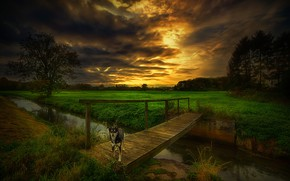Wallpaper dog, clouds, channel, the bridge, stream, trees