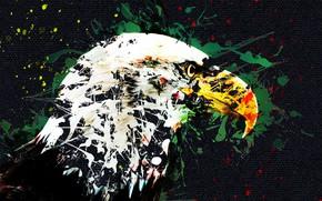 Picture bird, art, eagle