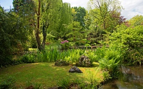 Picture greens, summer, grass, the sun, trees, pond, Park, stones, the bushes