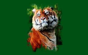 Picture look, tiger, art, handsome