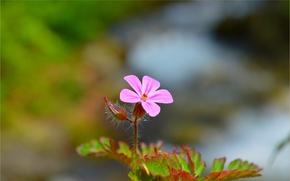 Picture Spring, Spring, Bokeh, Bokeh, Pink flower, Pink flower