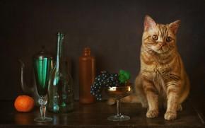 Picture glass, grapes, bottle, Mandarin, red cat, cat