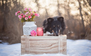 Picture winter, flowers, dog