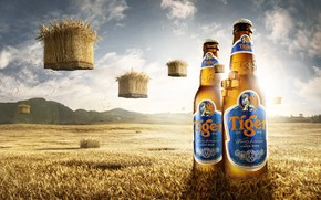 Picture field, mountains, beer, bottle, Tiger Beer Bali