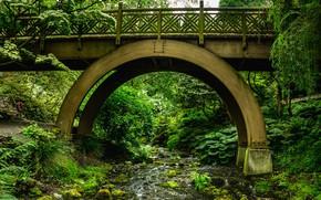 Picture greens, grass, trees, bridge, Park, stream, stones, moss, USA, the bushes, Portland, Rhododendron Garden