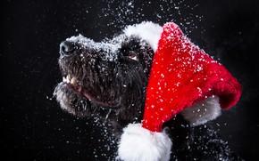 Picture snow, dog, New Year, Christmas, Christmas, dog, 2018, Merry Christmas, Xmas, funny, cute, decoration, santa …