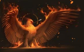Wallpaper fire, bird, wings, art, arrow, Phoenix, phoenix