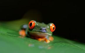Picture macro, sheet, frog