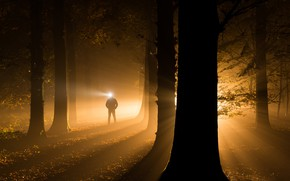 Picture autumn, light, trees, night, darkness, people