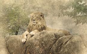 Picture stones, picture, Leo, lies
