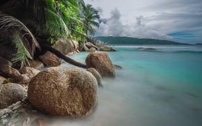 Picture sea, palm trees, coast, stone