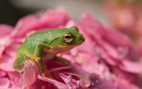 Picture flower, macro, frog