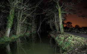 Wallpaper night, trees, road