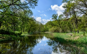 Picture forest, grass, the sun, summer, greens, water, Sumska oblast, Trostyanets, the bushes, trees, Ukraine