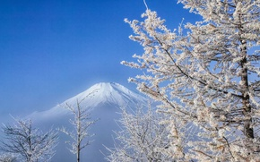 Picture winter, the sky, tree, mountain, the volcano