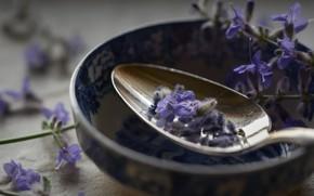 Picture macro, flowers, spoon