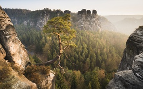 Picture forest, mountains, Germany, Germany, pine, Saxon Switzerland, Saxon Switzerland, Elbe Sandstone mountains, Elbe Sandstone Mountains