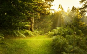Picture forest, summer, light