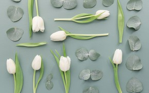 Picture flowers, Tulips, buds