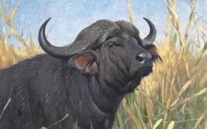 Picture 1913, German painter, Friedrich Wilhelm Kunert, German painter, Friedrich Wilhelm Kuhnert, A Buffalo, Buffalo